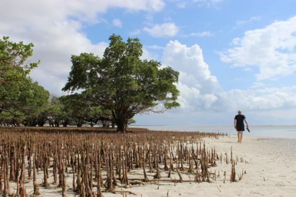 Mangal perto de Pemba, fotografia de António Gouveia