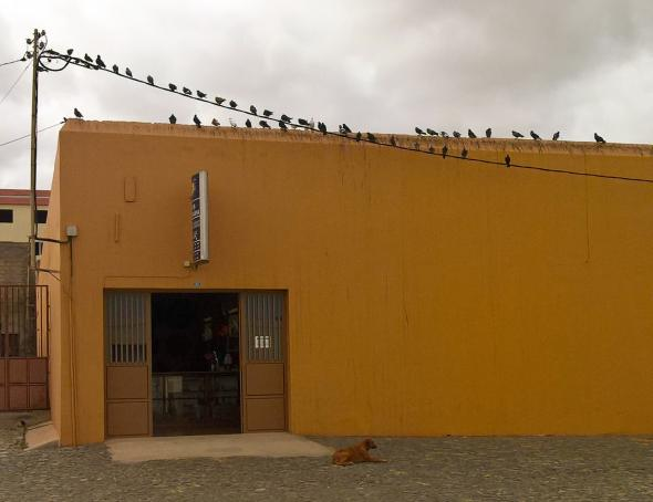 Pássaros| 2017 | Joaquim Arena