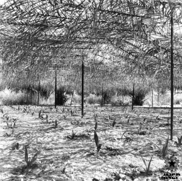 Experimental Farm of Pessubé, Guinea Bissau, photographer unknown, undated, source CasaComum.org