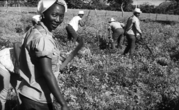 Voluntary work by Guinean students and camera exercise in Cuba, Dervis Espinosa, Cuba, INCA, 1967