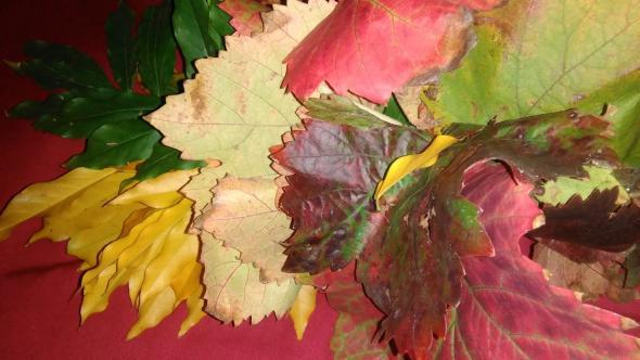 Folhas de Outono | 2018 | Autor anónimo