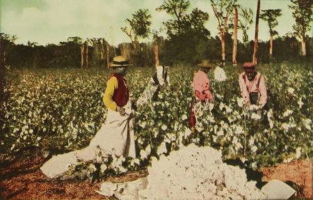 Trabalhadores afro-americanos colhendo algodão em Houston, EUA, 1913. A escravidão no plantio de culturas como esta ajudaram a financiar a revolução industrial.