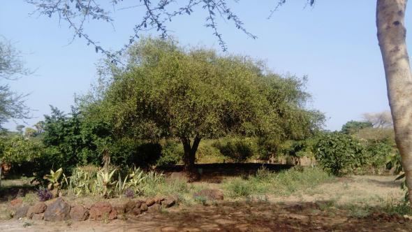 'Todas as manhãs, os alunos da escola Djarama, em Ndayane, Senegal, reúnem-se em circulo em torno desta árvore. Aí tomam o tomar o pequeno almoço e escutam-se uns aos outros, antes de continuar o dia.'