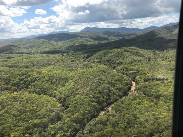 floresta do Miombo