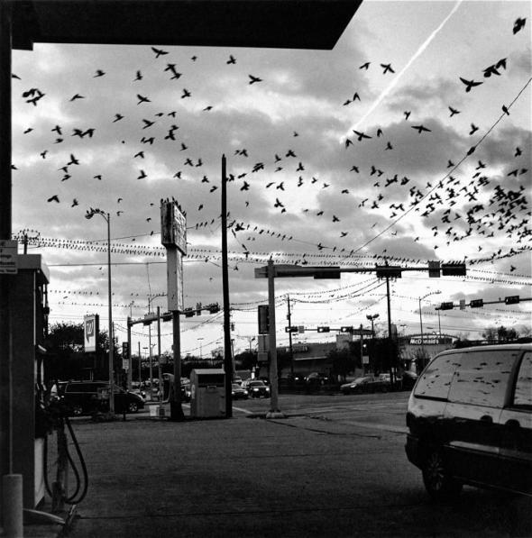 Black Birds (2013) Earlie Hudnall Jr.