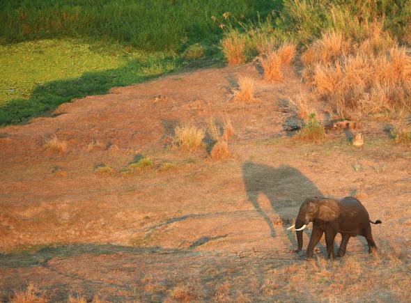 Elephant - Paul Kerrison