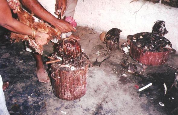 Mendoza sacrifica a galinha em cima da caveira