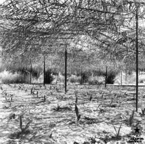 quinta experimental de Pessubé, Guinea Bissau, fotógrafo desconhecido, sem data, fonte CasaComum.org