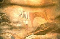En Somalie, des vaches sacrées vieilles de cinq mille ans à Laas Geel