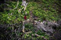 Óleo de palma, floresta e conflito em São Tomé