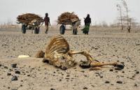 África: o celeiro do mundo