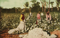 Decentralizar a Biopolítica, observações em torno de uma genealogia colonial da ecologia política