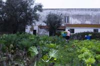O sistema alimentar industrial e a Soberania Alimentar