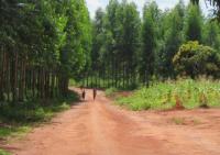 """Organizações portuguesas e moçambicanas denunciam """"The Navigator Company"""" quando chega a Portugal o primeiro carregamento de eucalipto moçambicano"""
