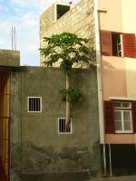 Os lugares da juventude no contexto urbano de Cabo Verde
